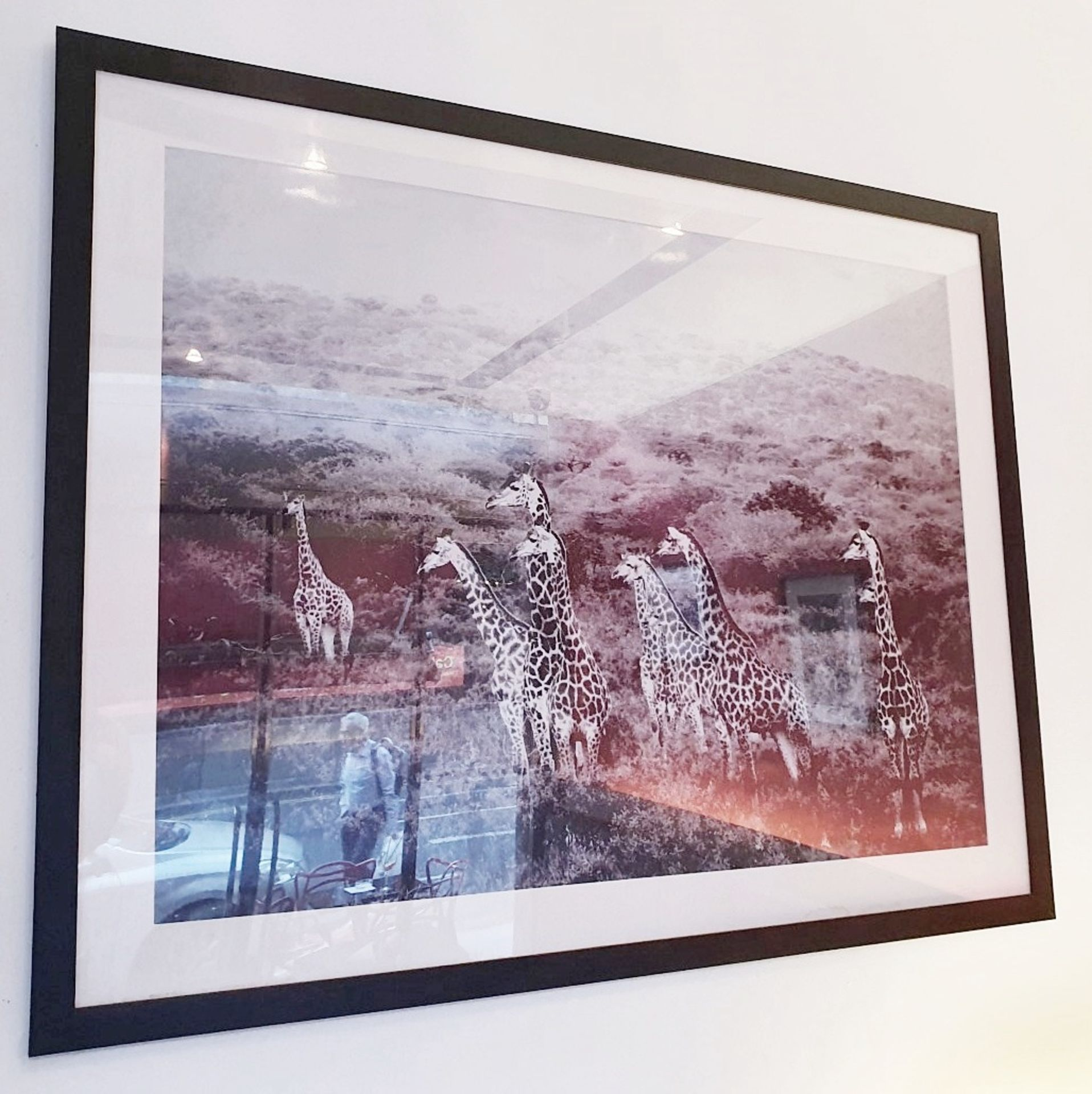 Lot 2636 - 1 x Large Framed Picture of a 'Tower' of Giraffes - Dimensions: w133cm x h105 - Ref: BRE002 -