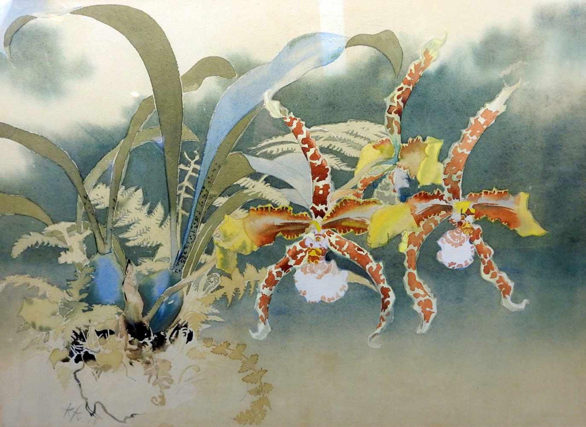 Wilde AmaryllisAquarell, Bleistift/Papier. Feines Aquarell mit Blüten, Farnen und Blumenzwiebeln.