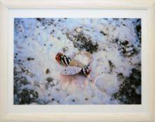 Walter Dahn, Feuerwerkskörper im Schnee, sign. Farbfotografie von 2004, gerahmt Walter Dahn, *