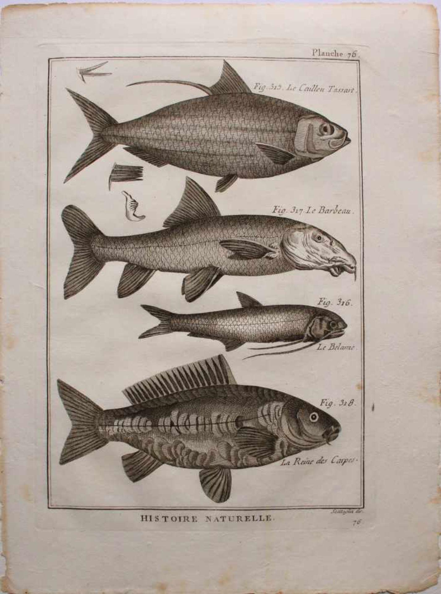 Unbekannter Künstler Barocke Fisch-Grafik Radierung 31 x 23 cm - Bild 2 aus 2