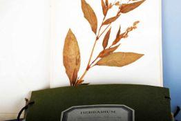 Herbarium, Anfang 1940er JahreIn einer Mappe zahlreiche gut erhaltene Pflanzen mit sorgfältigen