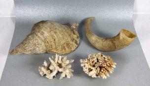 Konvolut Korallen u. Muschel4tlg., 2 weiße Korallen, 1 Horn, 1 Muschel, Gebr.sp., L. 10/26/30