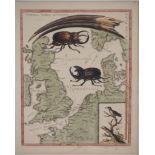 Lot 1 - George EDWARDS - Les animaux du voyage - Gravure originale rehaussée à [...]