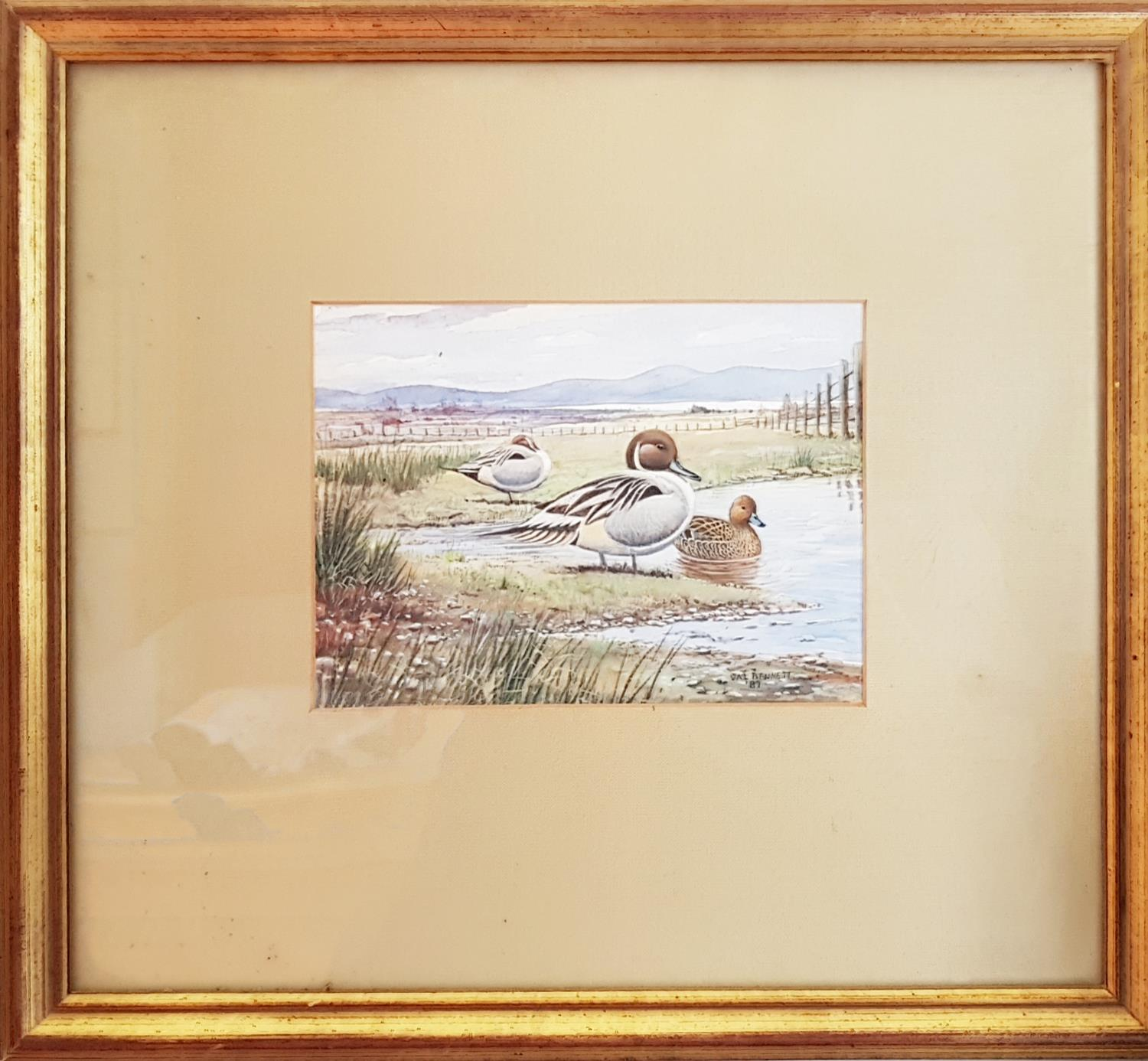 Lot 137 - Pintail on the Estuary by Val Bennett. Signed LR.