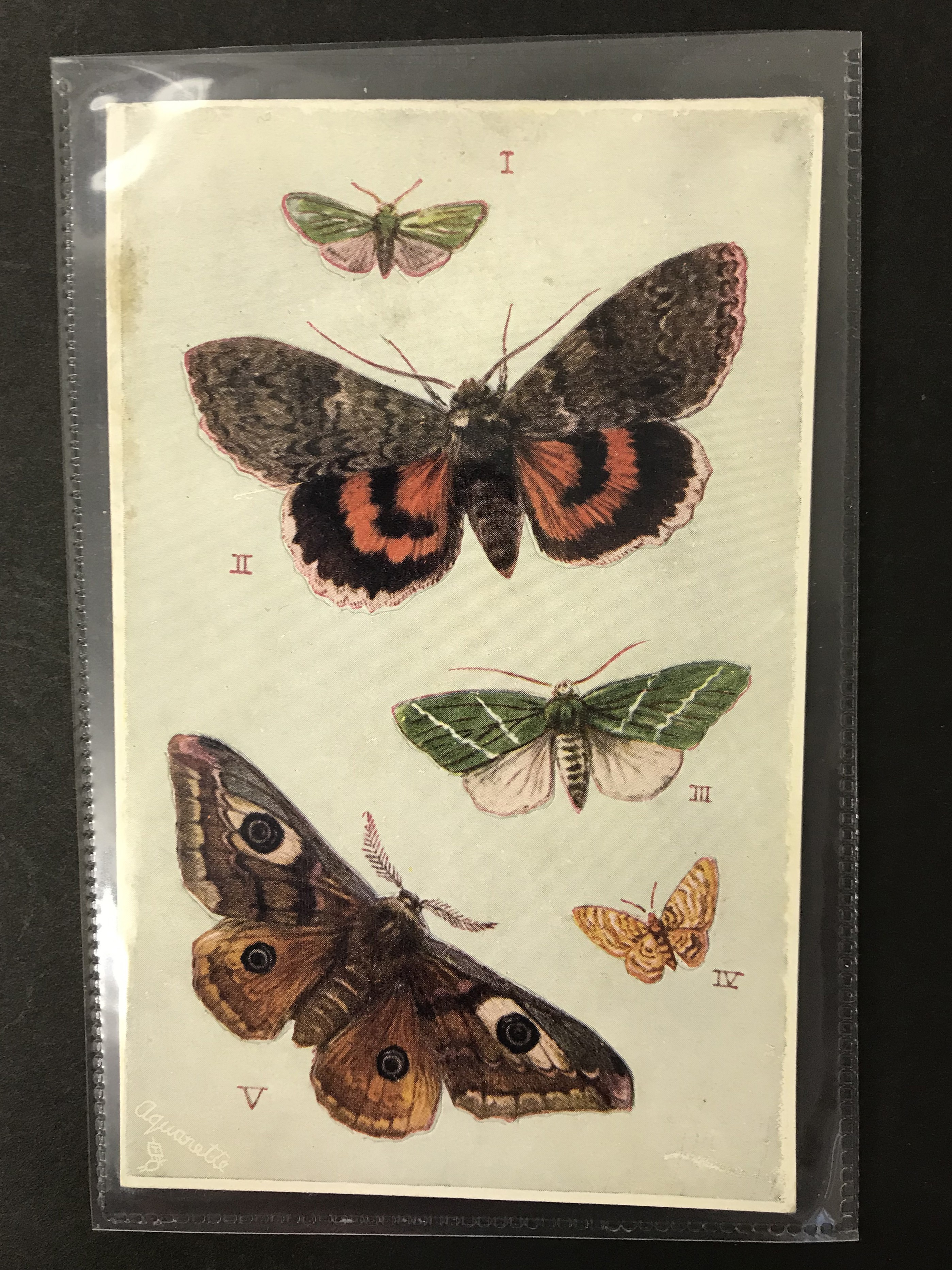 Lot 48 - POSTCARDS - BRITISH BUTTERFLIES