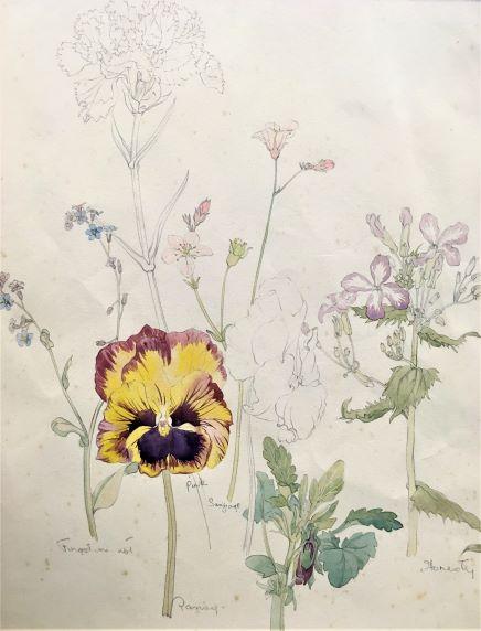 Lot 76 - BRITISH BOTANICAL SCHOOL (20th CENTURY) BOTANICAL SKETCH watercolour 28.5 x 23.6cm / 11 1/4 x 9 1/
