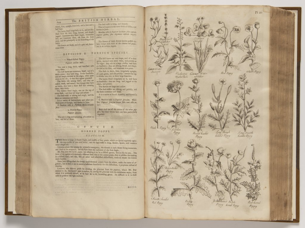 Lot 3 - JOHN HILL 1714 - 1775: THE BRITISH HERBAL: AN HISTORY OF PLANTS AND TREES, NATIVES IN BRITAIN,