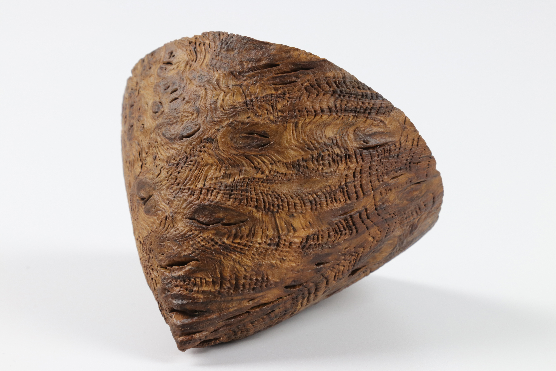 Lot 90 - Pascal Oudet (France) burr oak textured cone 8x10cm. Not signed