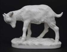 Zicklein / A figure of a goat kid, Nymphenburg, 1. Hälfte 20. Jh.Material: Porzellan, glasiert,