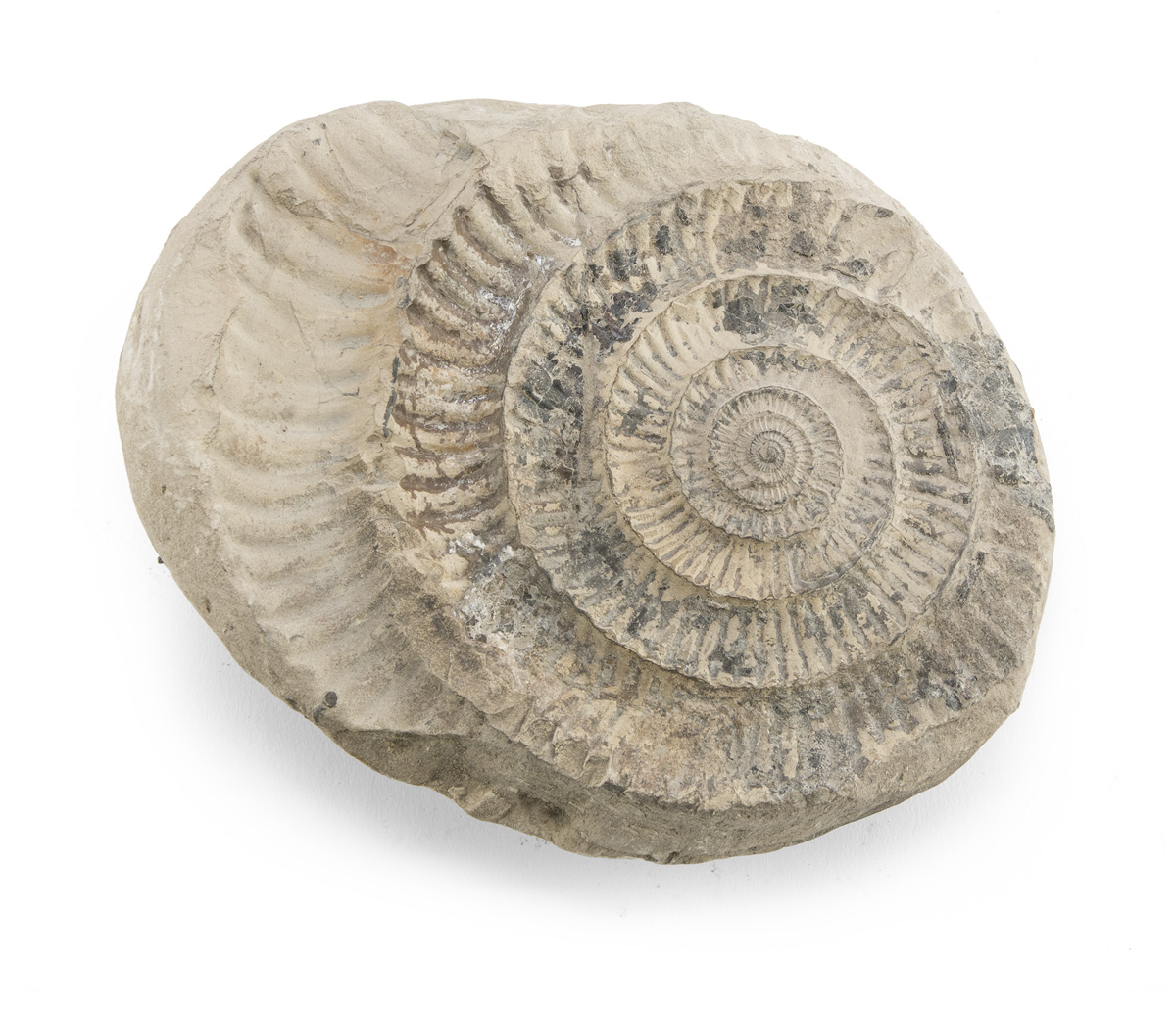 Lot 48 - FOSSIL OF COELENTERATE INDEFINABLE EPOCH