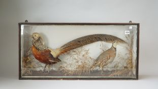 Taxidermy; a stuffed golden pheasant and a French partridge,