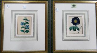 Continental School (19th century), Flower studies, a pair, engravings with hand colouring,