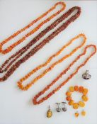 A single row necklace of graduated rough varicoloured butterscotch coloured amber beads,