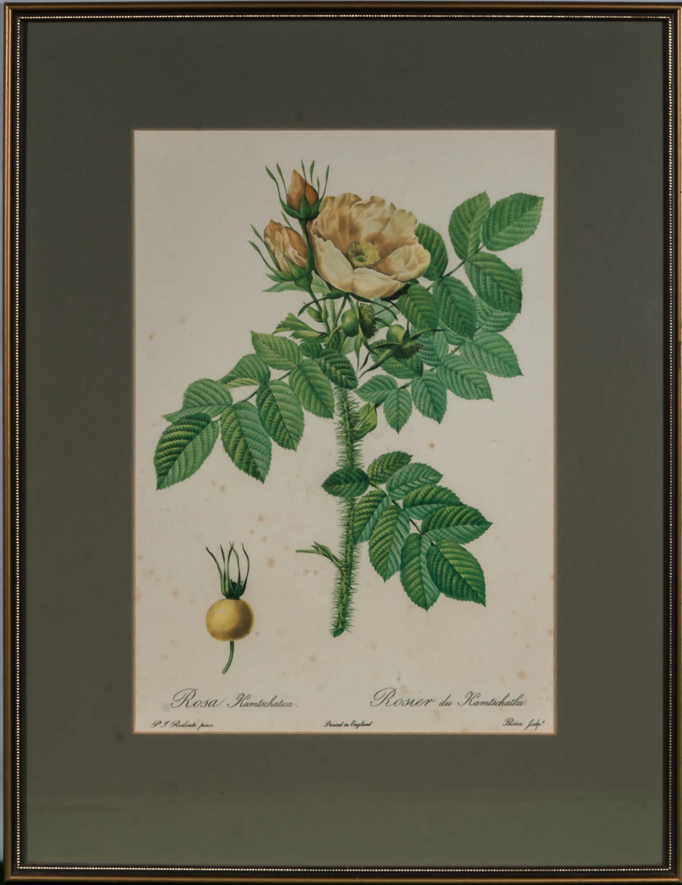 Lot 39 - Four framed prints of roses, image size 39cm x24cm