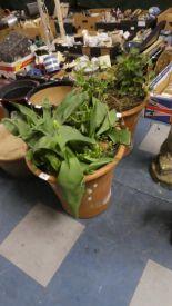 Lot 344 - A Pair of Terracotta Patio Plant Pots, Each 41cm Diameter and 37cm High