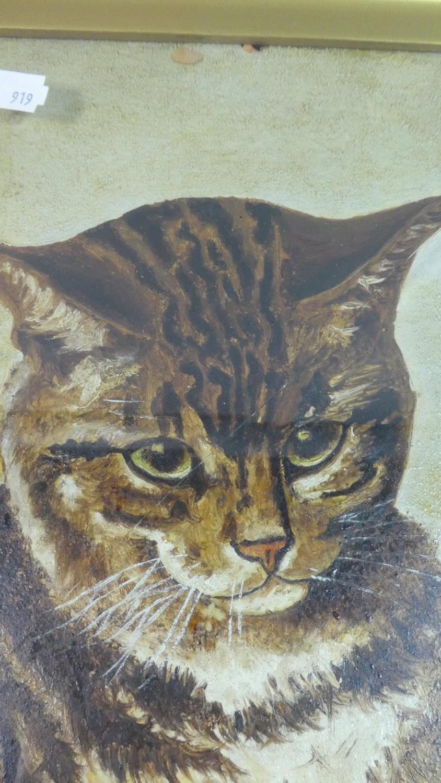 Lot 79 - A Gilt Framed Oil on Board of a Cat Signed C H Clavering, 30cm x 22cm