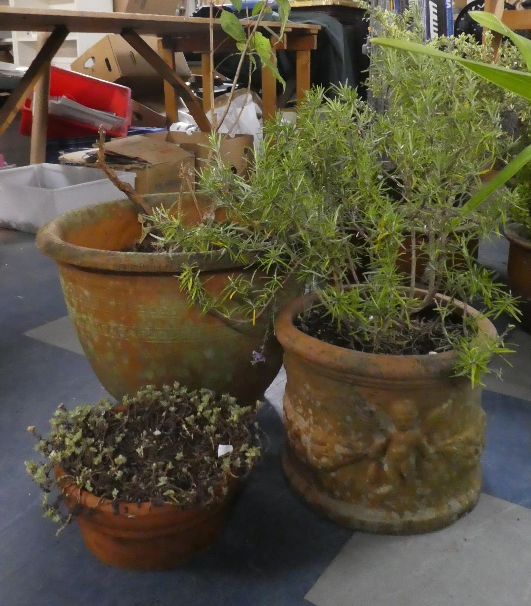 Lot 460 - Three Terracotta Patio Plant Pots, Largest 47cms Diameter