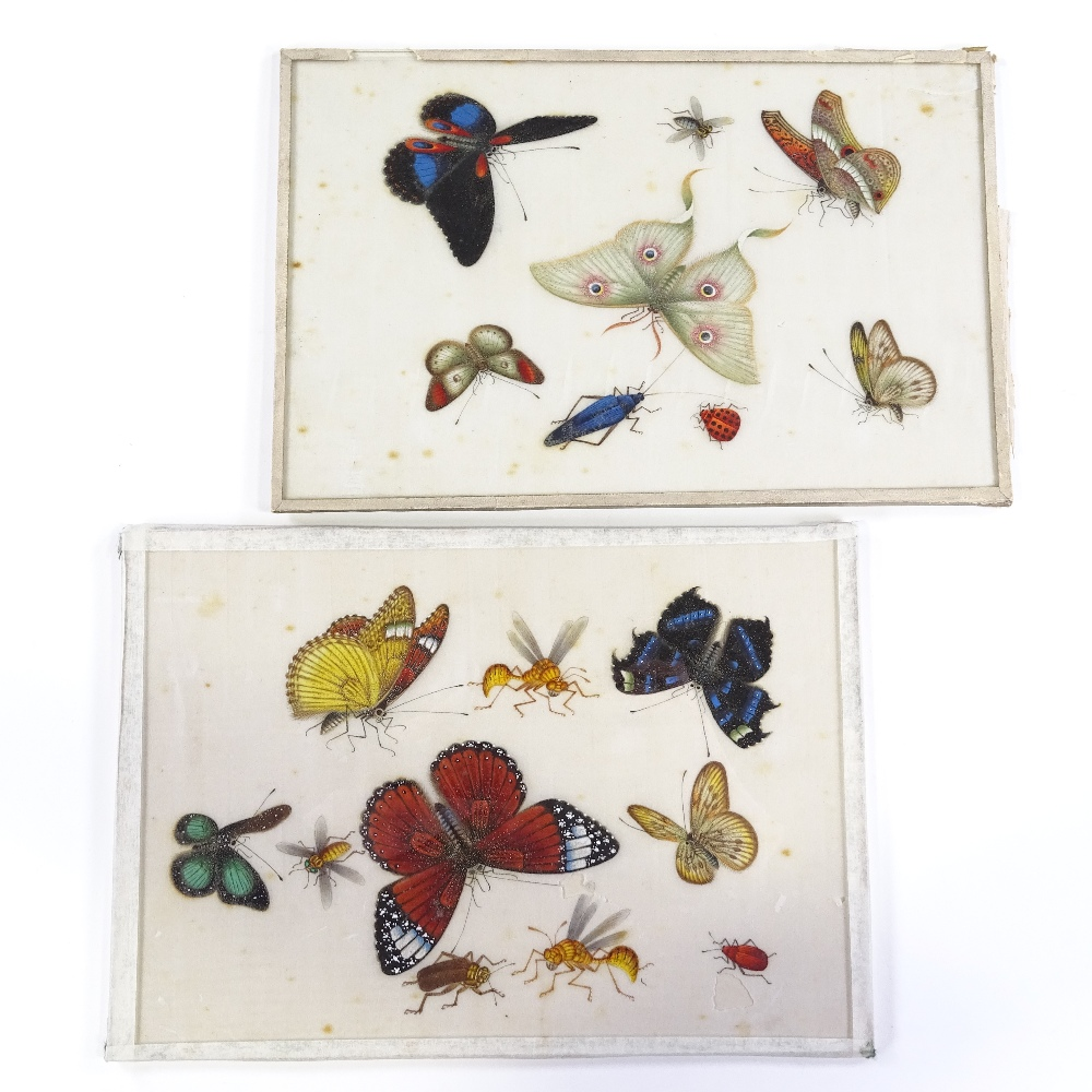 Lot 45 - A pair of Chinese watercolours on rice paper, circa 1900, studies of butterflies and insects, 18cm x