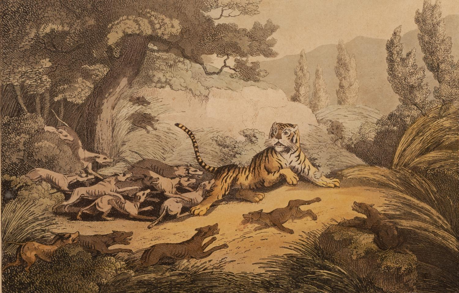 Lot 386 - AFTER WILLIAMSON & HOWITT BY CLARK PAIR OF TIGER HUNTING COLOURED BOOKPLATE ENGRAVINGS Numbered 21
