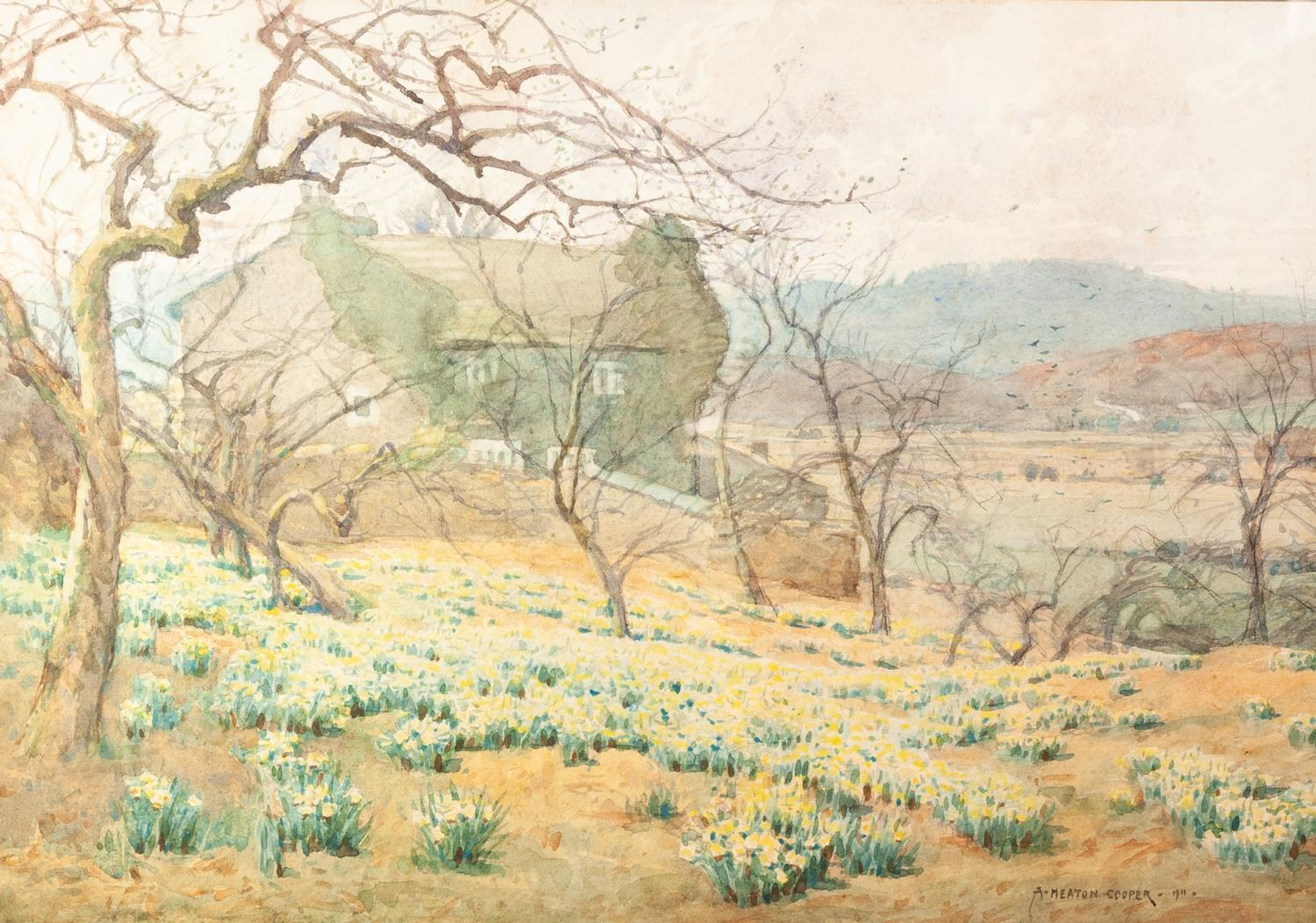 Lot 173 - ALFRED HEATON COOPER RBA (1864 - 1929) Watercolour Daffodils near Haverthwaite Signed and dated 1911