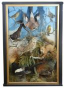 Taxidermy: A Victorian case of Brit. birds and a red squirrel