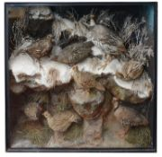 Taxidermy: A Victorian case of various partridges by Ward & Co.