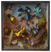 Taxidermy: A Victorian case of eleven tropical birds