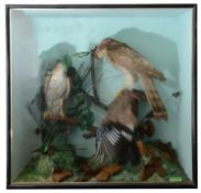 Taxidermy: A late Victorian case of a family of kestrels