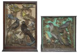 Taxidermy: A Victorian woodpecker, bullfinches, a greenfinch, others