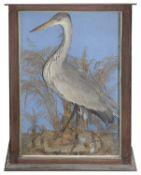Taxidermy: A Victorian Heron