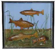Taxidermy: A case of coarse fish by S. H. Ambrose