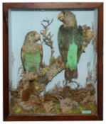Taxidermy: Two Victorian Green Parrots by Henry Ward.