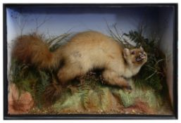 Taxidermy: A Victorian pine marten by James Gardner