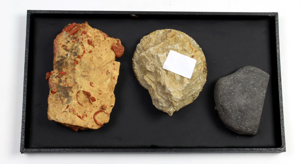 Lot 4661 - (lot of 3) Ammonite fossil group