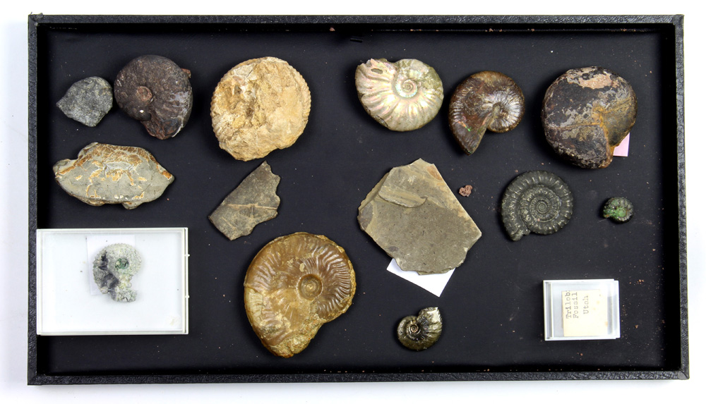 Lot 4662 - (lot of 15) Assorted fossil group