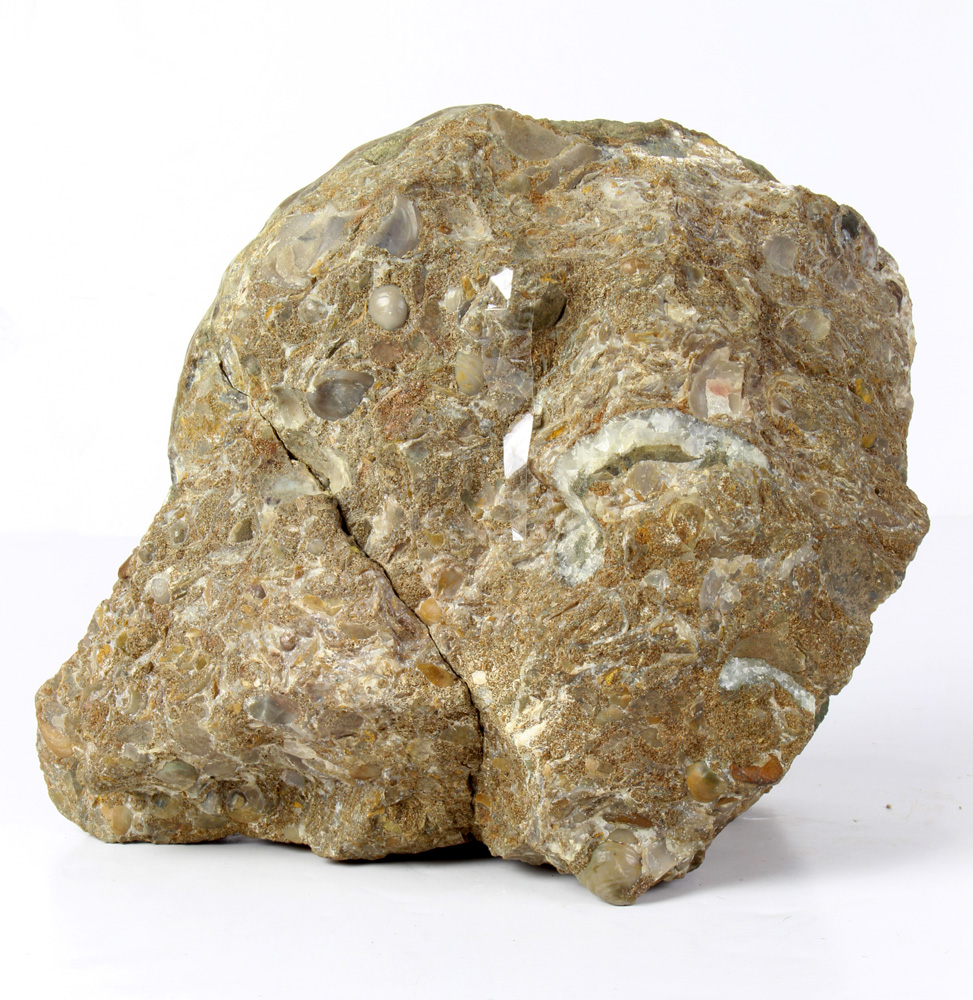 Lot 4665 - Large ammonite fossil