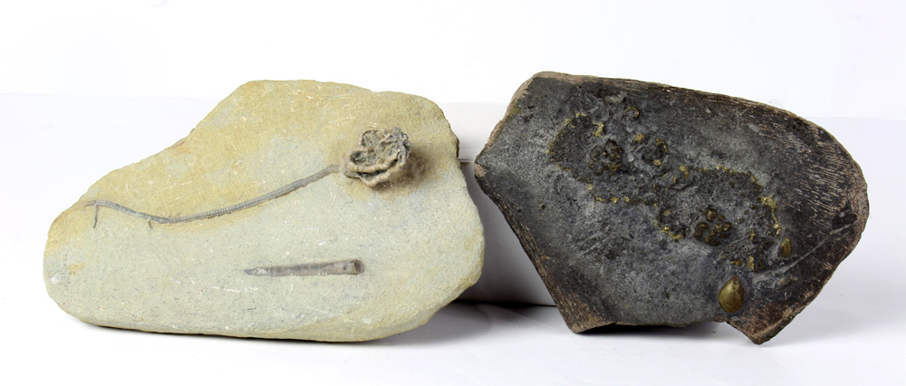 Lot 4668 - (lot of 2) Fossil group