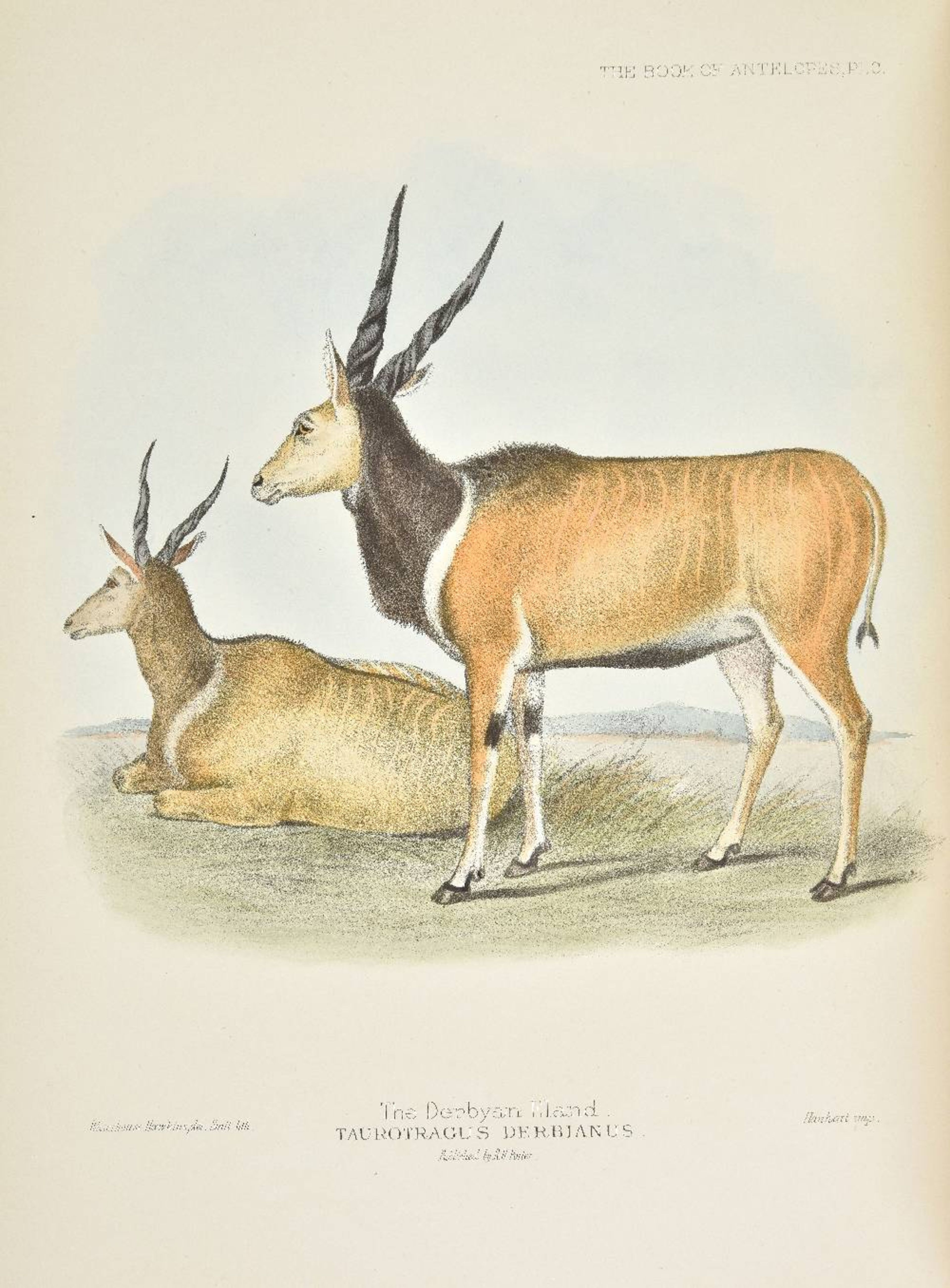 Lot 38 - Sclater (Philip Lutley and Oldfield Thomas). The Book of Antelopes, 4 volumes, 1894-1900, 100 fine