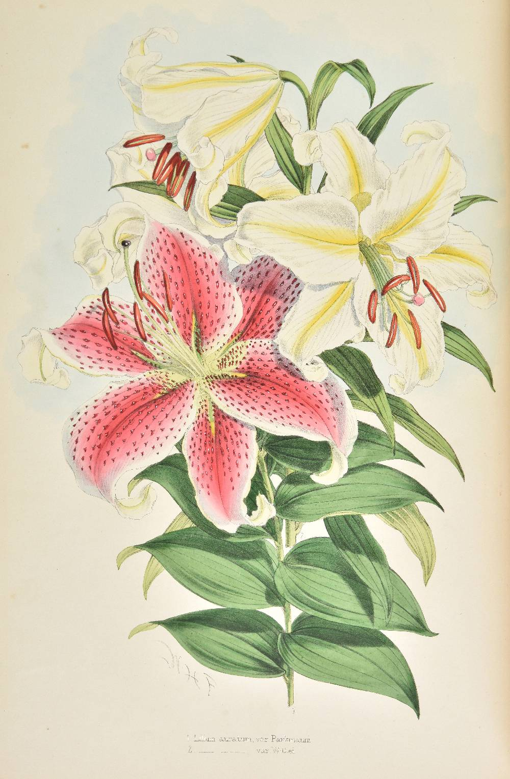 Lot 28 - Elwes (Henry John). A Monograph of the Genus Lilium, 1st edition, [1877-] 1880, decorative title