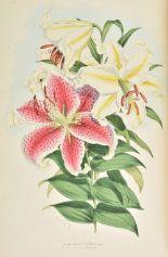 Lot 28 - Elwes (Henry John). A Monograph of the Genus Lilium, 1st edition, [1877-] 1880, decorative title