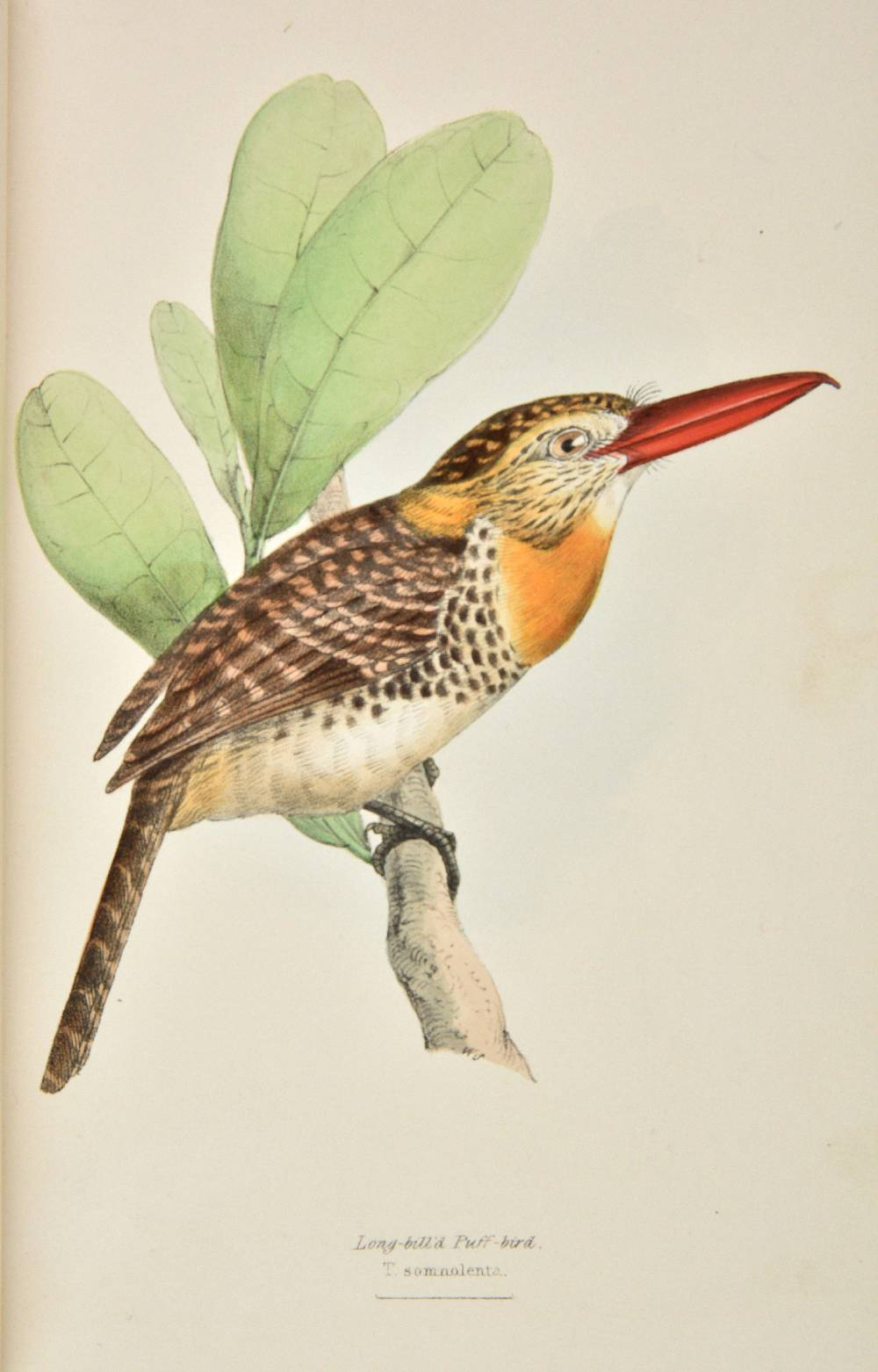 Lot 40 - Swainson (William). A Selection of the Birds of Brazil and Mexico, London: Henry G. Bohn, 1841, 78
