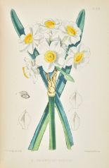 Lot 24 - Burbidge (F.W.). The Narcissus: Its History and Culture with Coloured Plates and Descriptions of all