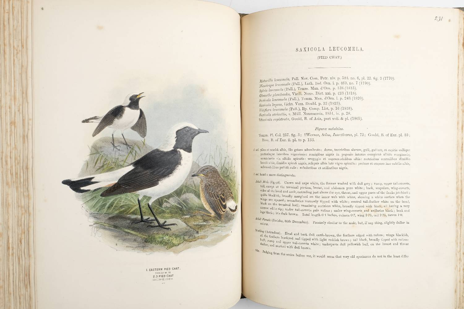 Lot 59 - Dresser (Henry Eeles). A History of the Birds of Europe, including all the Species inhabiting the