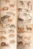 MACGILLIVRAY WILLIAM 19TH CENTURY NATURAL HISTORY SCIENCE BOOK