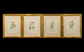 Collection of Four Framed Prints of Rasp