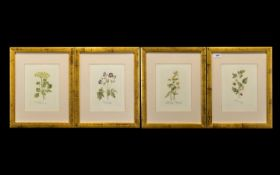 Collection of Four Framed Prints of Raspberry, Chamomile, Geranium & Alexanders. All mounted and