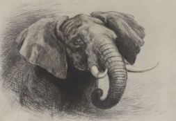 Hayward Hardy, etching, Study of an elephant, 18 x 25cm