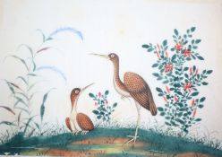 A 19th century Chinese album of 14 paintings on pith paper, birds and figures