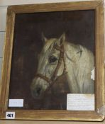 Attributed to Edward Calvert (1799-1883), oil on canvas, Study of a white horse, 34 x 29cm