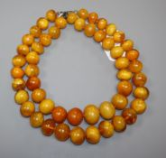 Two single strand amber bead necklaces, gross weight 245 grams, longest 54cm.